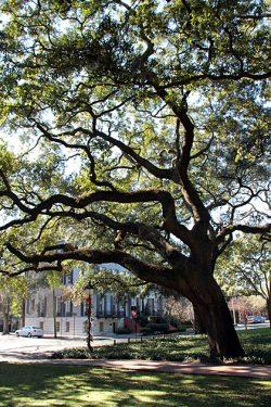 Read more about the article Pulaski Square