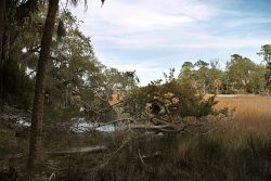 Read more about the article Skidaway Island