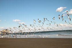 Tybee Island – Savannah's Beach