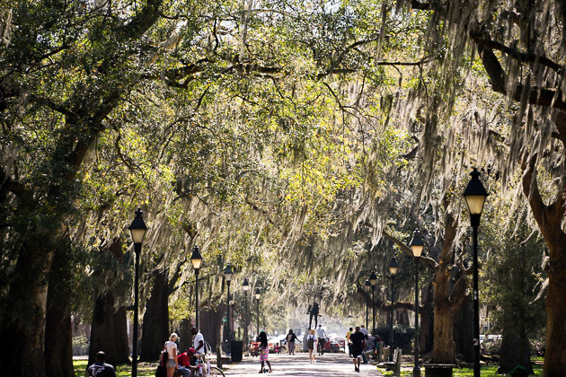 Spanish Moss: Neither Spanish nor Moss