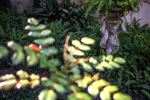 26 Stock Photos Savannahfor91days.com