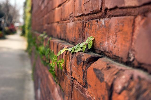 30 Stock Photos Savannahfor91days.com
