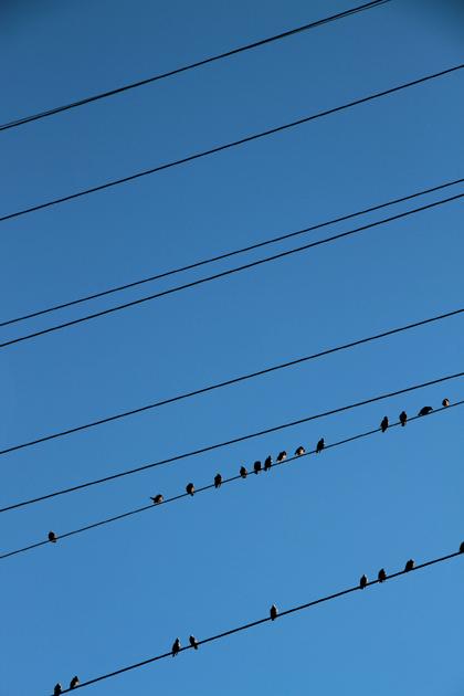 Birds on a String