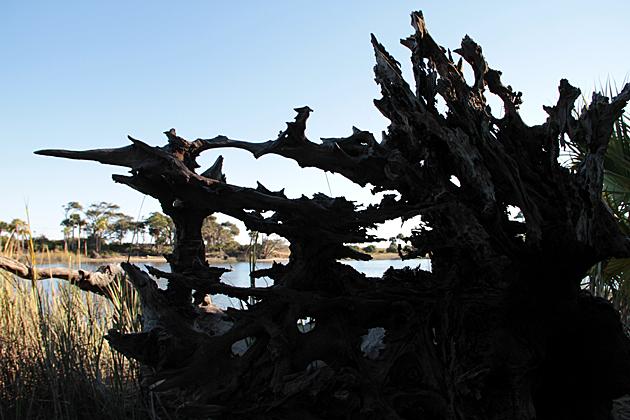 Bizarre wood