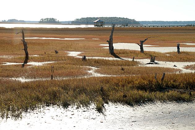 Blufton Marsh