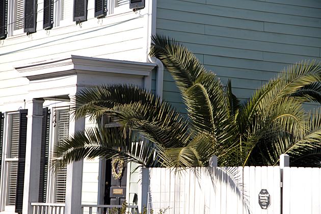 Bushy Palm Savannah