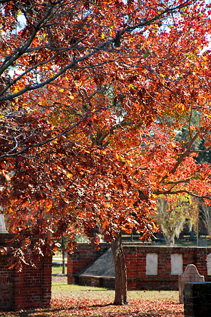 Fall in Savannah