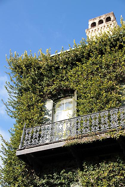 Green House Savannah