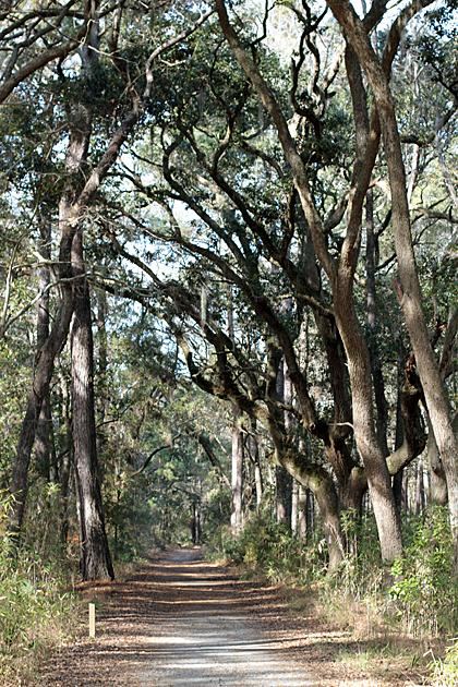 Hiking Savannah