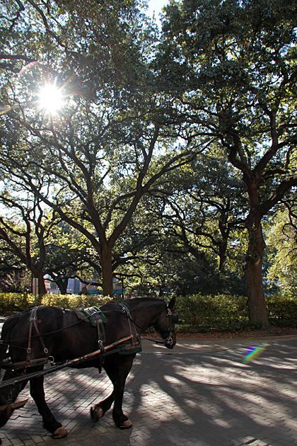 Horse Carriage Savannah