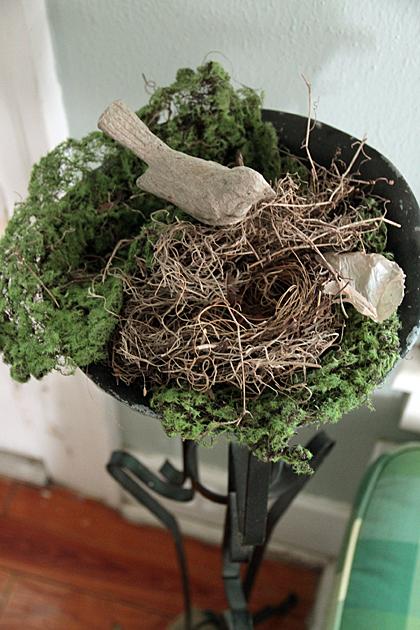 Living Bird Nest