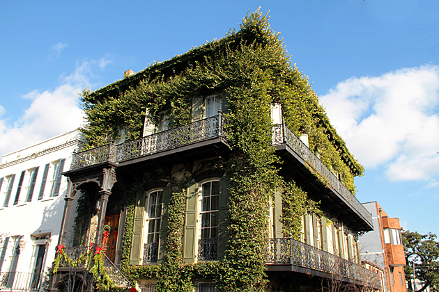 Poison Ivy House
