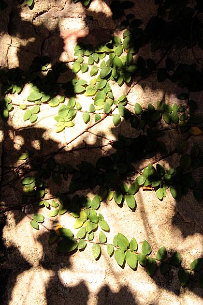 Random leaves Savannah 2