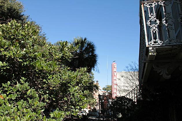 Savannah 1