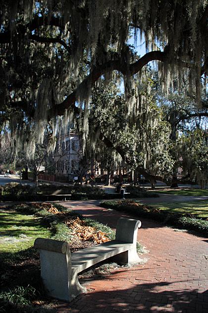 Savannah Bench 2