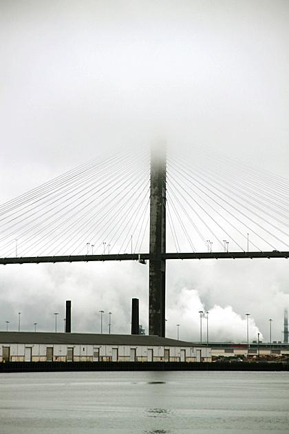 Savannah Fog