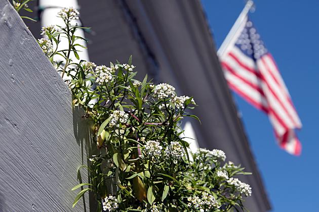 Savannah Herbs