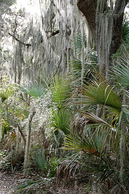 Savannah Island