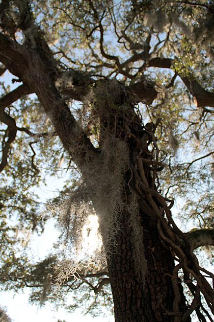 Savannah Jungle 1