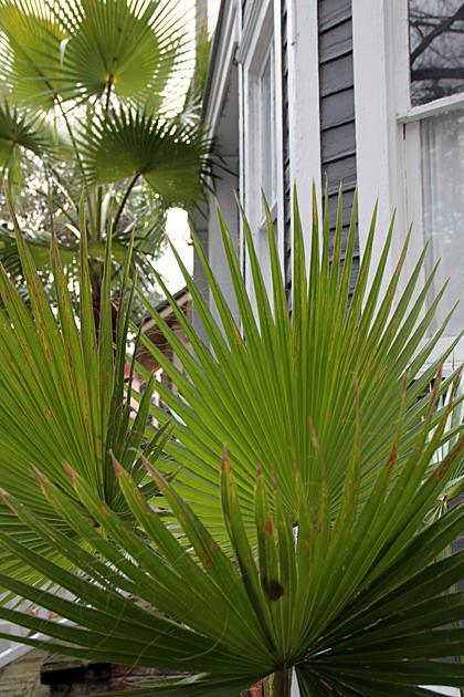 Savannah Palms 1