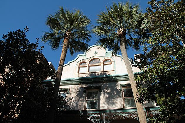 Savannah Palms