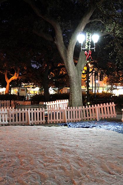 Savannah Snow 1