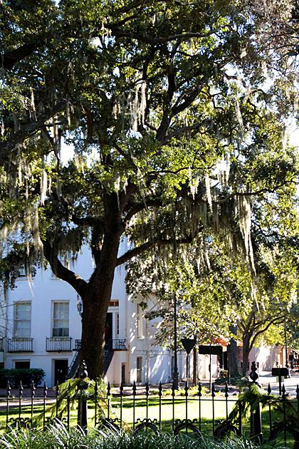 Savannah Squares 4