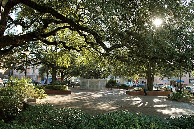 Savannah Squares 6