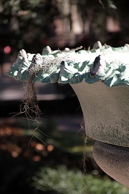 Spanish Moss Fountain