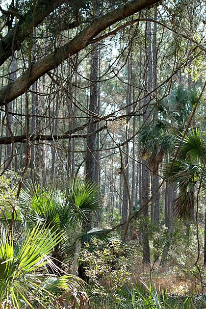Tarzan Paradise