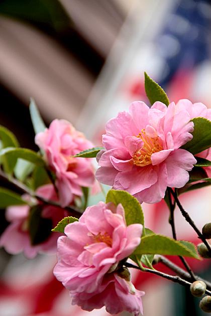 USA Blossom