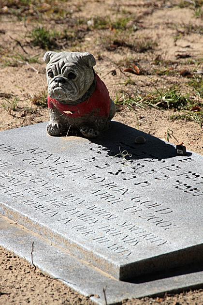 bulldog grave