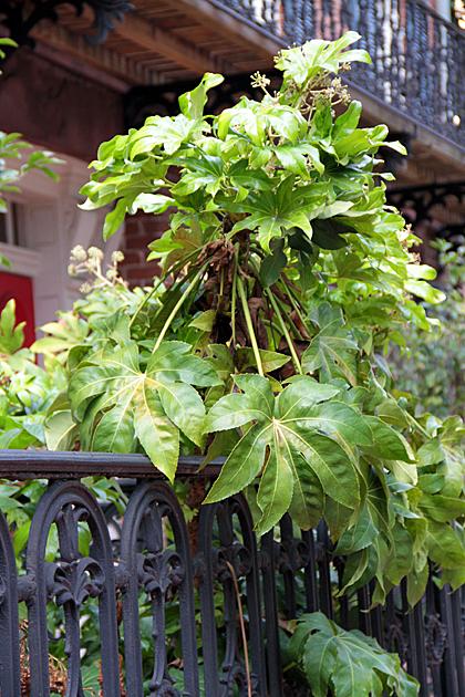 bushy Savannah