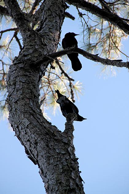 eerie birds