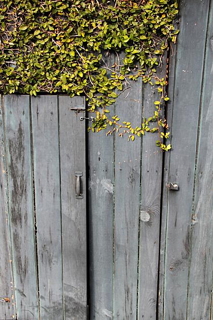 hidden door savannah 2