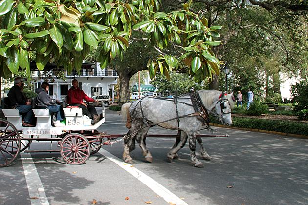 horse tour Savannah 1