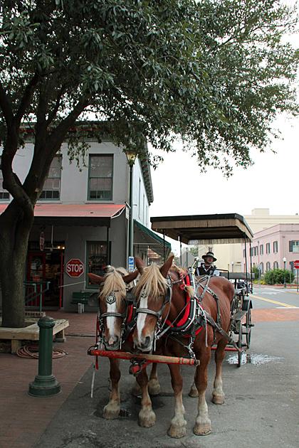 horse tour savannah