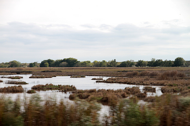 savannah swamp